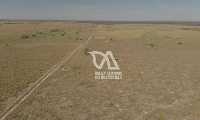 Fazenda à venda, 1134 hectares por R$ 24.000.000,00 - Novo Mundo/MT - Foto 15