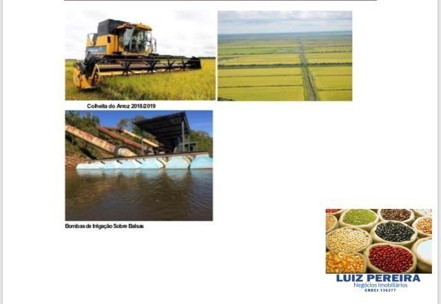 FAZENDA A VENDA P/ AGRICULTURA, PROJETO IRRIGAÇÃO EM LAGOA DA CONFUSÃO -TO - Foto 4