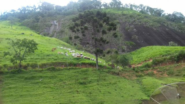 Fazenda Bom Jardim - Foto 8
