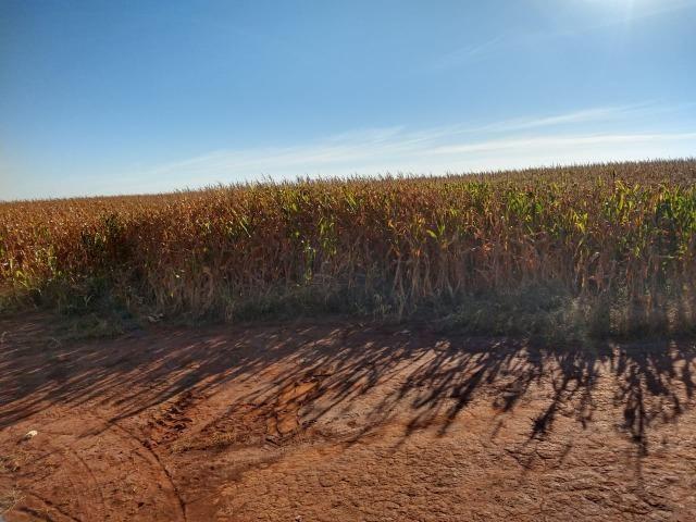 Fazenda Agrícola. 105 Alq. em Montividiu-GO - Foto 3