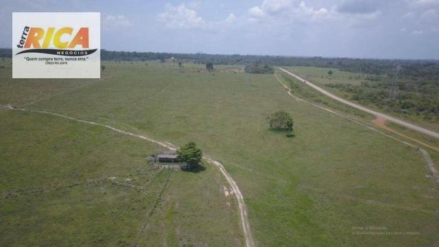 Fazenda com 320 hectares a venda na Zona Rural de Porto Velho/RO - Foto 7