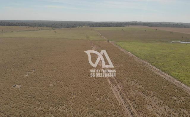 Fazenda à venda, 1134 hectares por R$ 24.000.000,00 - Novo Mundo/MT - Foto 5