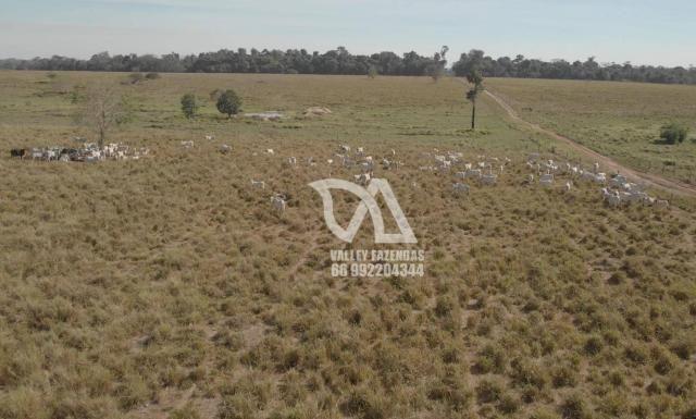 Fazenda à venda, 1134 hectares por R$ 24.000.000,00 - Novo Mundo/MT - Foto 13