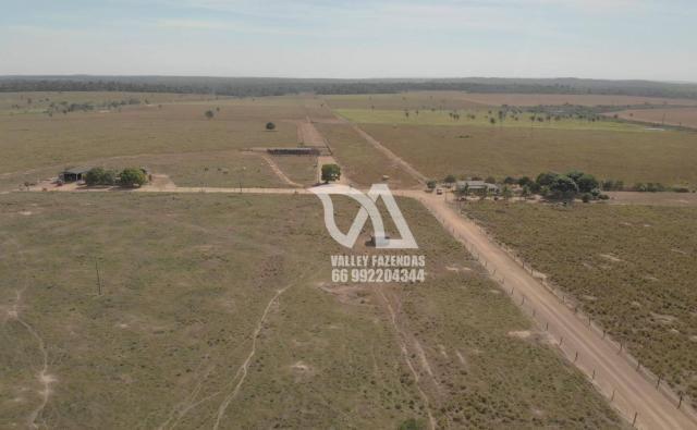 Fazenda à venda, 1134 hectares por R$ 24.000.000,00 - Novo Mundo/MT - Foto 3