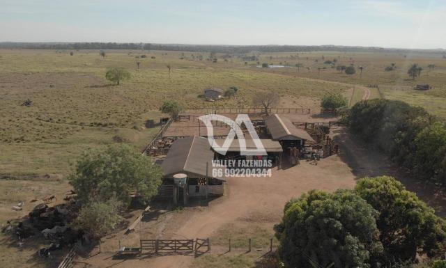Fazenda à venda, 1134 hectares por R$ 24.000.000,00 - Novo Mundo/MT - Foto 11