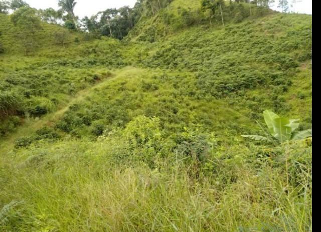 Vendo terreno de 4 alqueires em Ribeirão, Vargem Alta - Foto 3