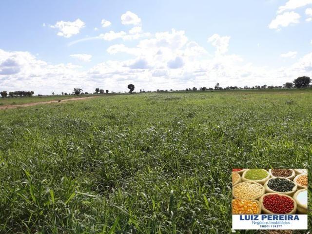 FAZENDA A VENDA DE 292 ALQUEIRÕES EM TALISMÃ - TO (Dupla Aptidão) - Foto 12