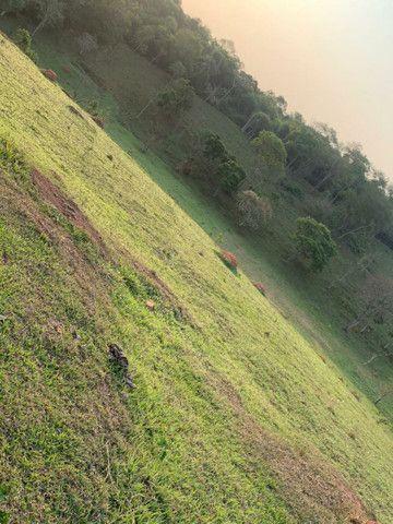 J12, aproveite oportunidade terrenos 1000mts negocie direto com proprietário  - Foto 4