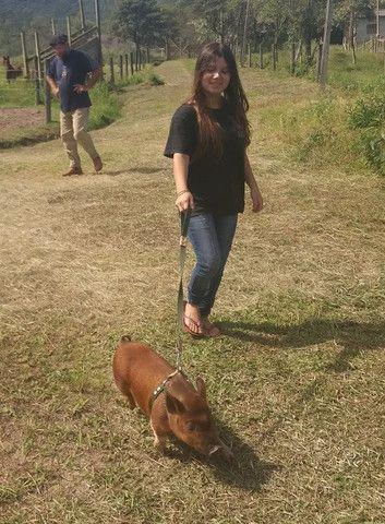 Mini Pig (Mini Porco) - Foto 5