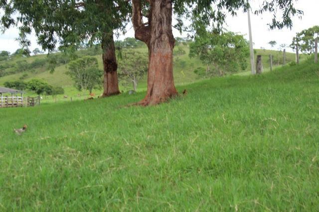 """Fazenda Montada 25 Alqueires Cocalzinho""""Toda Formada,72 km de Anapolis,129 km Goiania - Foto 5"""