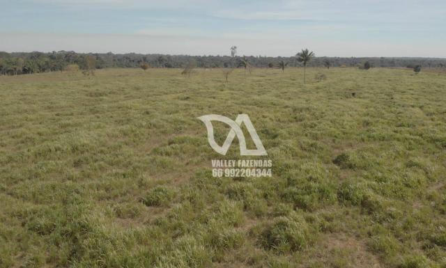 Fazenda à venda, 1134 hectares por R$ 24.000.000,00 - Novo Mundo/MT - Foto 12