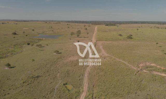 Fazenda à venda, 1134 hectares por R$ 24.000.000,00 - Novo Mundo/MT - Foto 14