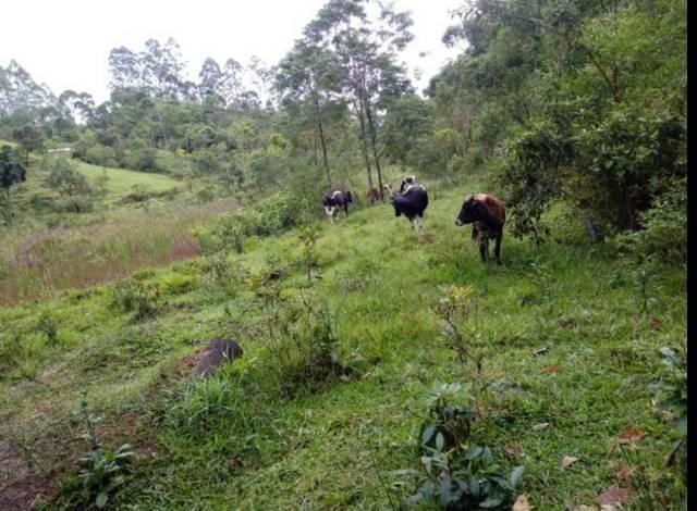Vendo terreno de 4 alqueires em Ribeirão, Vargem Alta - Foto 9