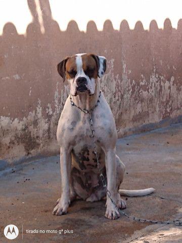 Cachorra - Foto 3