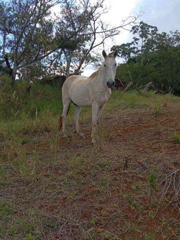 Vende-se Cavalos - Foto 3