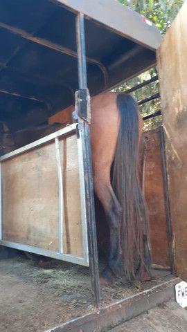 Frete para cavalos - Foto 2