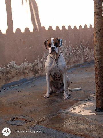 Cachorra - Foto 2