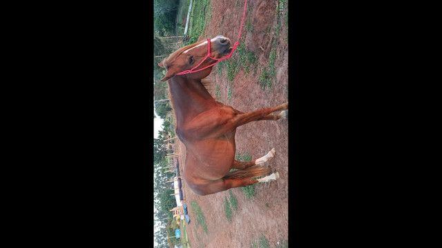 Cavalo - Foto 6