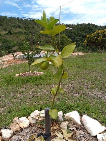 Vendo ou troco sítio em Taquaraçu de Minas a52km de bh - Foto 5