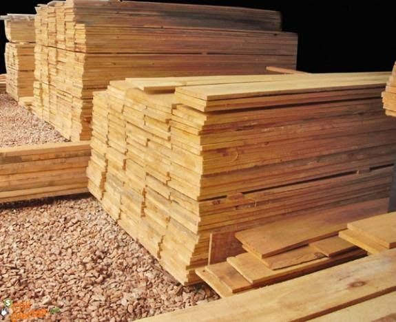 Tabuas de Pinus 20 cm Distribuição
