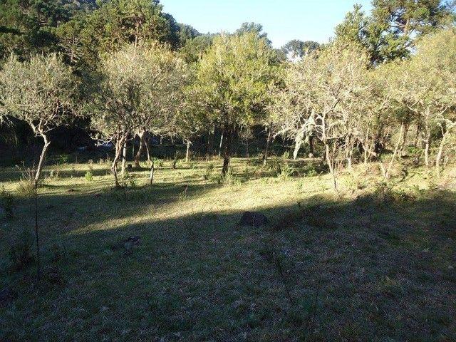Lindo terreno na Serra Catarinense  - Foto 3