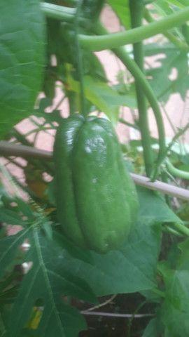 Verduras organicas coive,chuchu,abobrinhas  - Foto 3