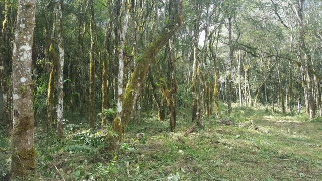 Chácara 20.000m² em ótima localização na colônia Murici R$310.000,00 -83-CH