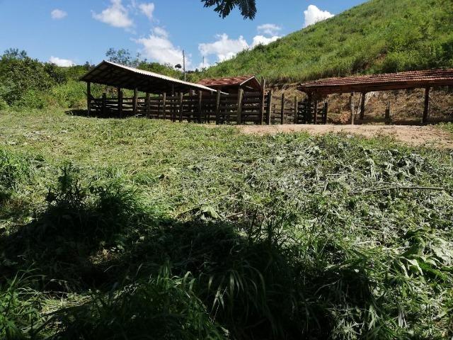 Fazenda com 127 hectares em Baixo Guandu - Foto 10