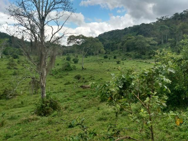 Fazenda Ibicaraí - Foto 2