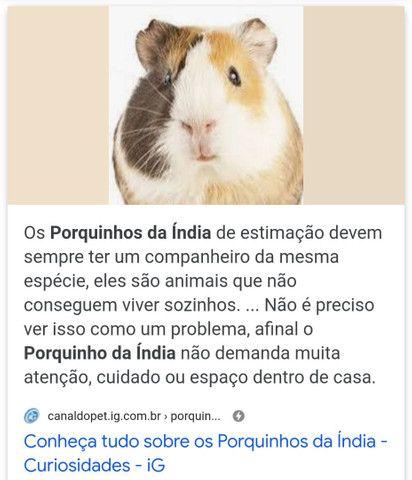 Porquinhos da Índia e coelhos  - Foto 2
