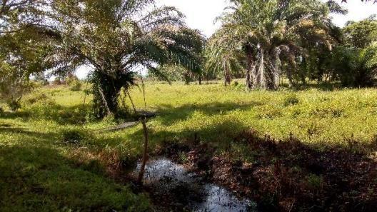 Fazenda 85 hec Vendo com Porteira Fechada - Foto 20