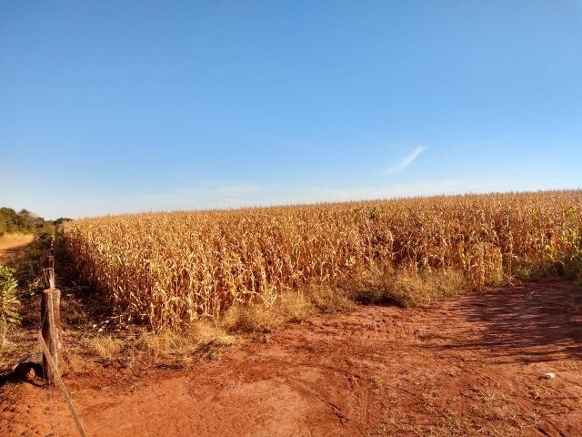 Fazenda Agrícola. 105 Alq. em Montividiu-GO - Foto 4
