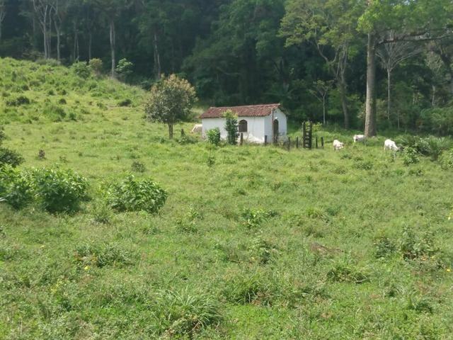 Fazenda Ibicaraí - Foto 14