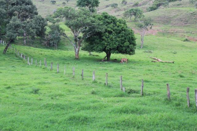 """Fazenda Montada 25 Alqueires Cocalzinho""""Toda Formada,72 km de Anapolis,129 km Goiania - Foto 20"""