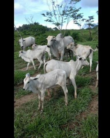 Vende-se fazenda e sítio PARCELADOS - Foto 3