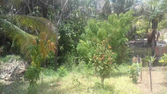 Sítio em panaquatira são José de ribamar - Foto 2