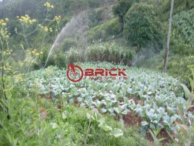 Sítio em teresópolis com cachoeira, nascente, terra para plantação e árvores frutíferas. - Foto 10