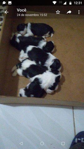 Filhotes cachorro - Foto 3