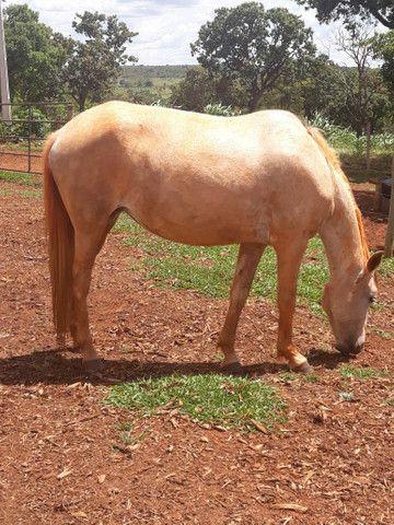 2 animais 1 egua e 1 cavalo  - Foto 3