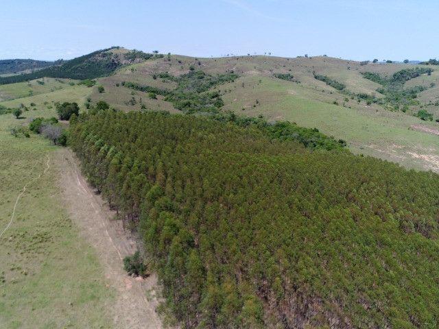 Área com eucalipto - 34,3907ha plantado (14 alqueires)- Itararé/SP - Foto 7