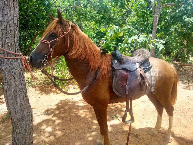 Vendo cavalo - Foto 5