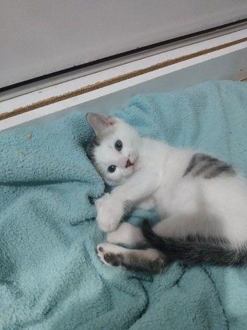 Filhote de gato para adoção! - Foto 2