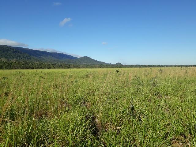 Fazenda com 784,77 hectares entre Jangada e Rosário Oeste - Foto 8