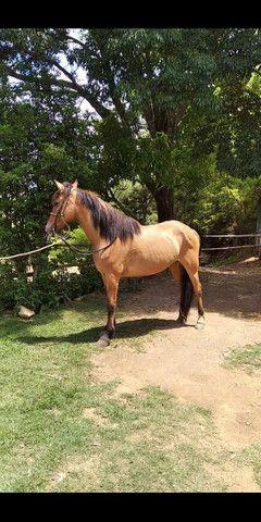 Vendo cavalo castrado  - Foto 2