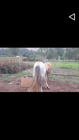 Cavalo Minero  - Foto 3