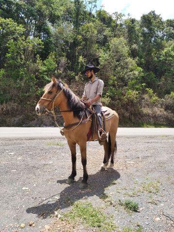 Vendo cavalo castrado