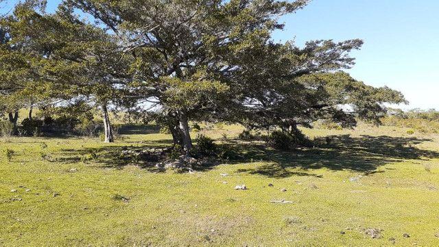 R- 394 Vendo Belíssima propriedade de 50 hectares próximo a Pedro Osório - Foto 3