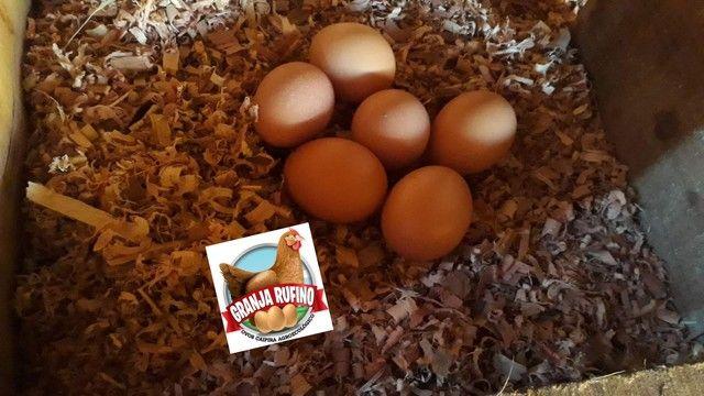 Ovos caipira agroecológico