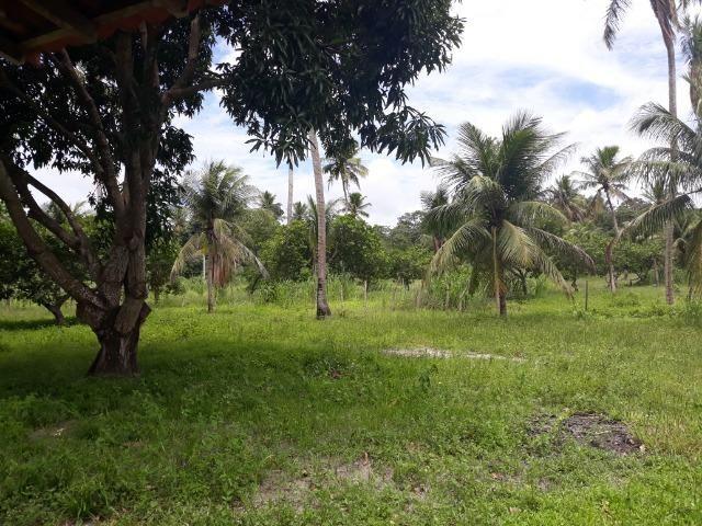 Oportunidade de Chácara, com 5,2 ha, há margem da RN 316, em Monte Alegre/RN - Foto 3