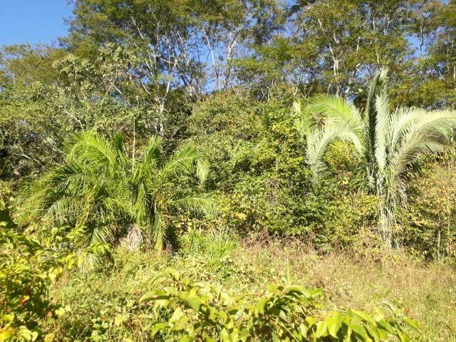 Fazenda 866 Hectares apos 35 km da Agrovila das Palmeiras - Foto 17
